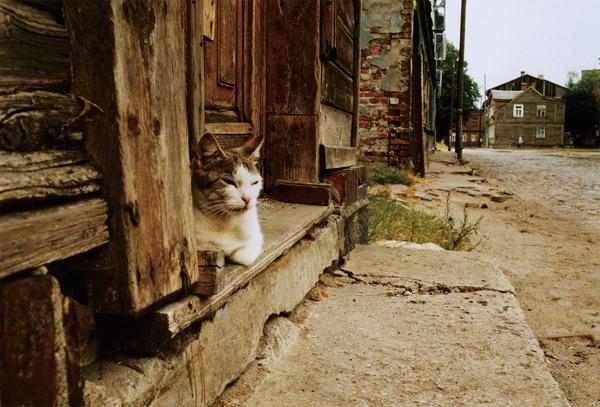 約30年にわたって旅の写真を撮り続ける写真家、尾仲浩二の写真展「ネコとコージくん」