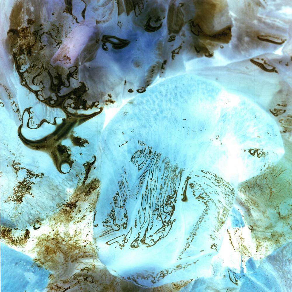 水を張った容器に浮かべた花弁の変化を、リバーサルフィルムで撮り続けた作品群を展示。吹田のギャルリ・ド・リヴィエールにて、大阪在住の写真家・まつイマさきの個展「float,rot」。